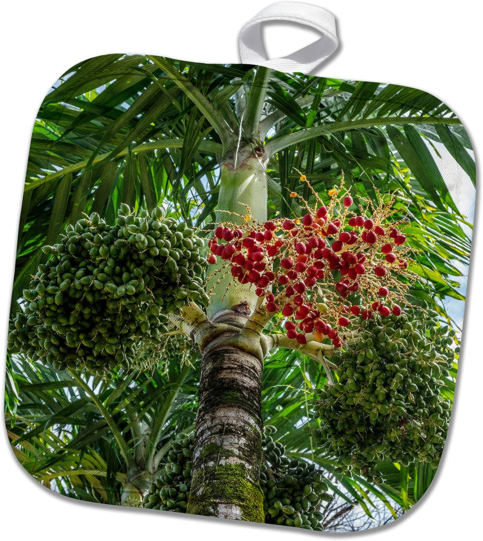 3dRose Danita Delimont - Plants - Manila Palm tree - Potholders (phl_345132_1)