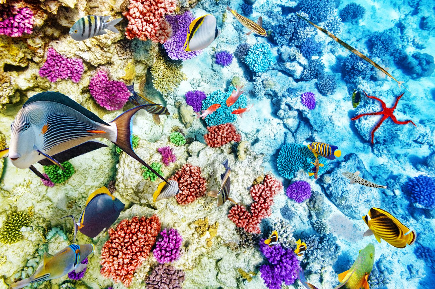 CHOIS Custom Film CF3050 Animal Fishes Colorful Corals Glass Window DIY Frosted 4' W by 3' H