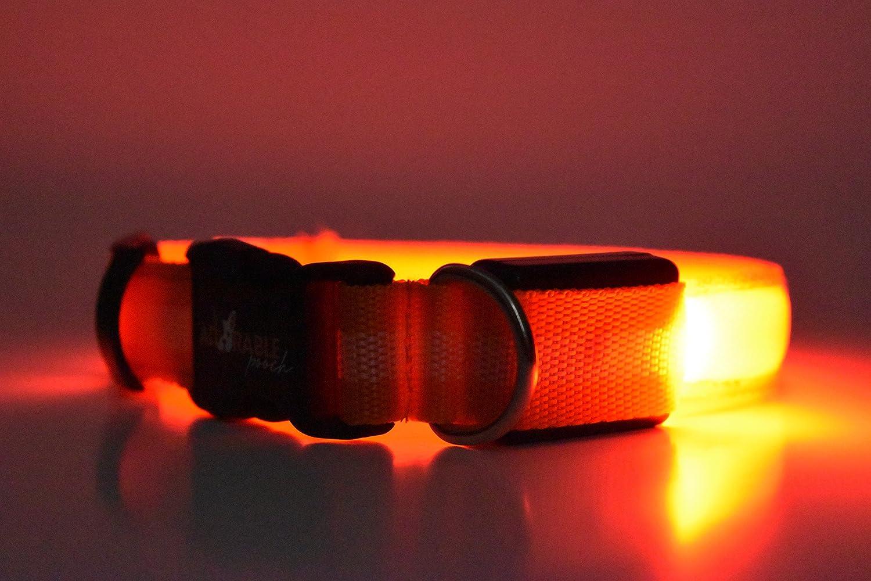 orange m orange m Adorable Pooch Safety LED Dog Collars Great for Night Walks (Medium, orange)