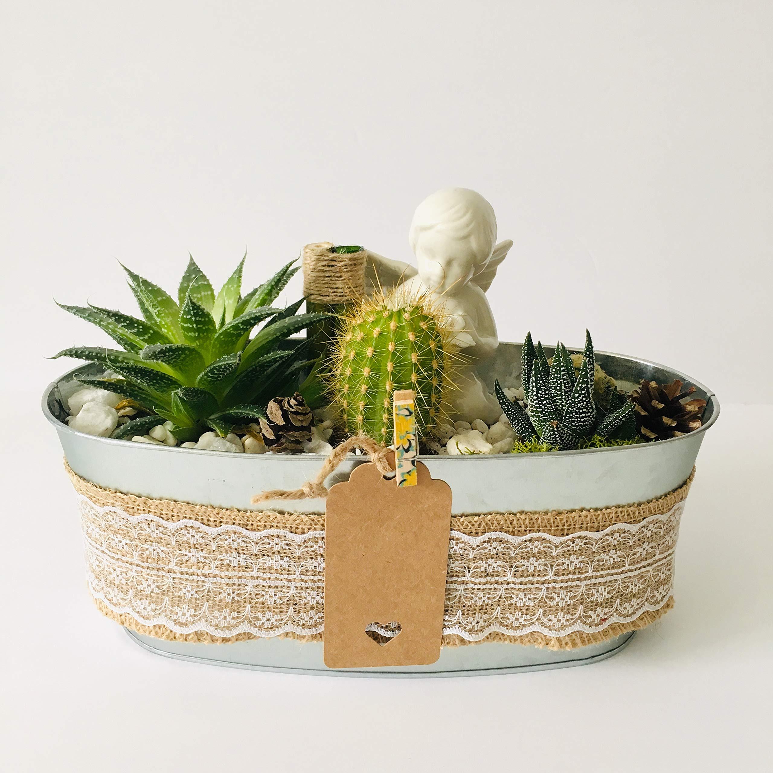 Live Succulent Angel's Garden Arrangement: 1 x 4'' Succulent, 3 x 2'' Succulents/Cacti, Free Gift!!!