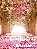 Beautiful Cherry Blossoms & Relax Music - Screen Saver