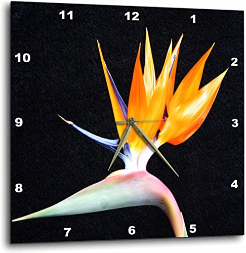 3dRose dpp_50971_3 Tropical Bird of Paradise-Wall Clock, 15 by 15-Inch