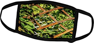 3dRose Wooden Trellis Grid and Green Garden Plants - Face Covers (fc_264144_3)
