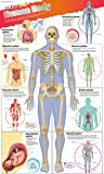 DKfindout! Human Body Poster