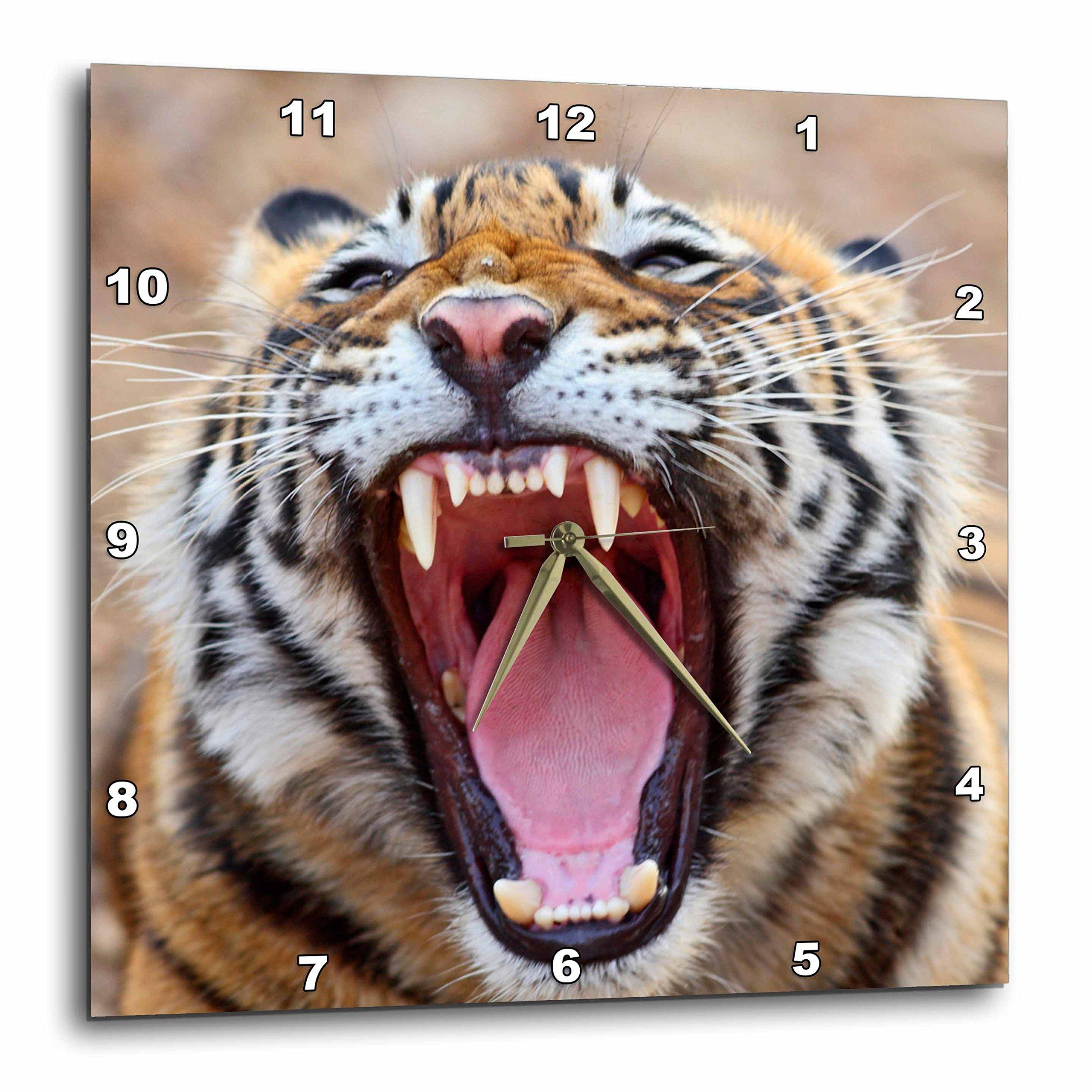 3dRose dpp_75679_3 Royal Bengal Tiger, Ranthambhor National Park, India-AS10 JRA0274-Jagdeep Rajput-Wall Clock, 15 by 15-Inch