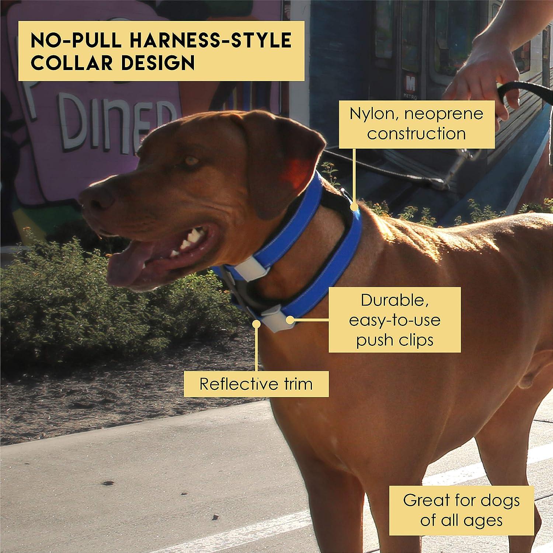 Amazon.com : Cesar Millan Grey Dog Collar for Small Dogs, Pack ...
