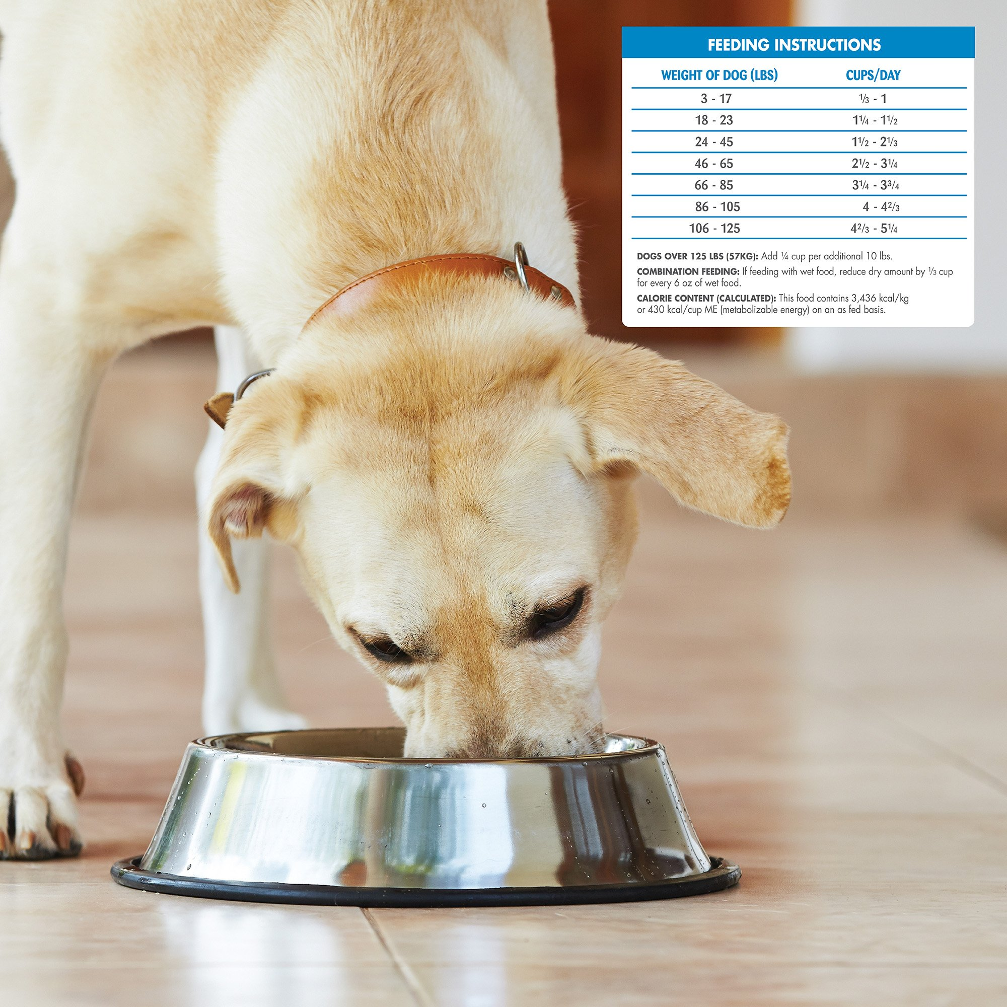 Wellness Simple Natural Grain Free Dry Limited Ingredient Dog Food, Turkey & Potato, 26-Pound Bag by Wellness Natural Pet Food (Image #7)
