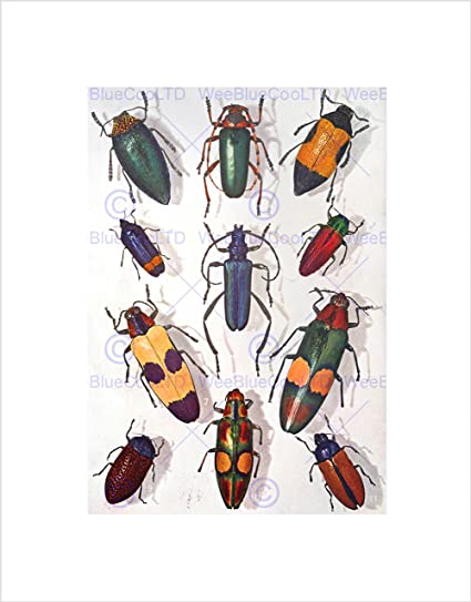 Amazon.com: SCIENTIFIC PHOTOGRAPH BEETLES INSECT COLOURFUL RAINBOW ...