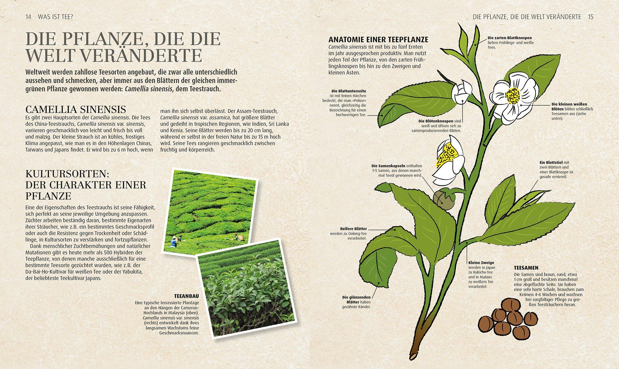 Ungewöhnlich Pflanze Blume Anatomie Bilder - Anatomie Ideen ...