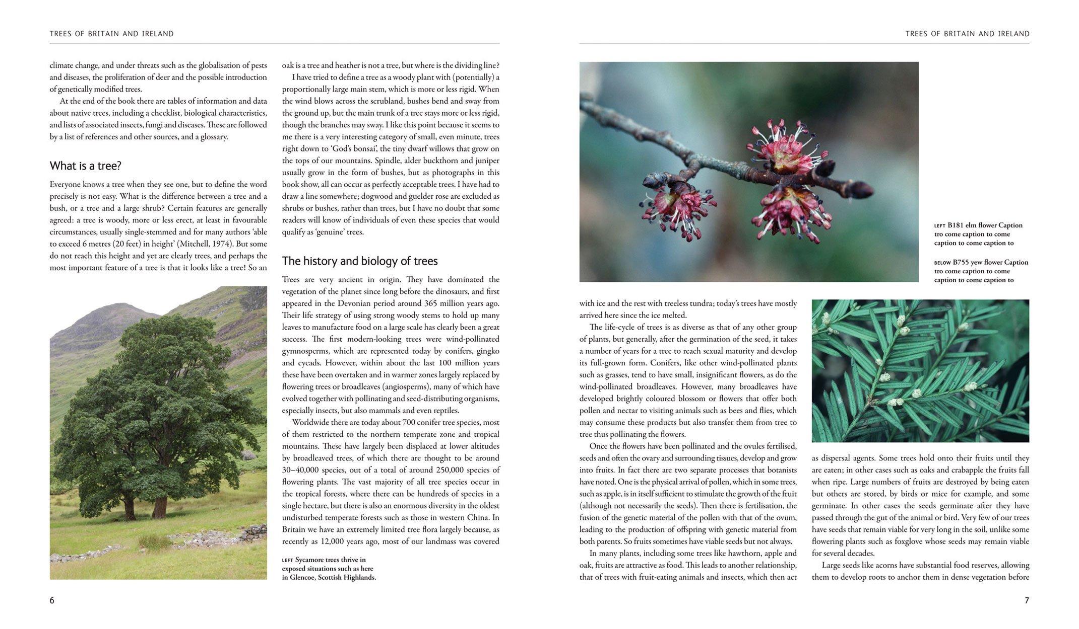 Trees of Britain and Ireland: Amazon co uk: Edward Milner