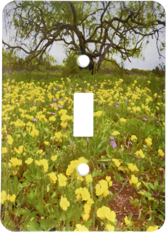 3drose Lsp 191410 1 Evening Primrose Oenothera Sp Near The Gulf Coast In Southern Texas Single Toggle Switch
