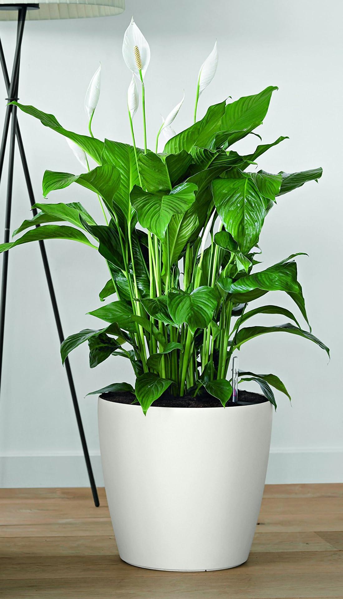 Classico Color matte white, self watering planter by Lechuza