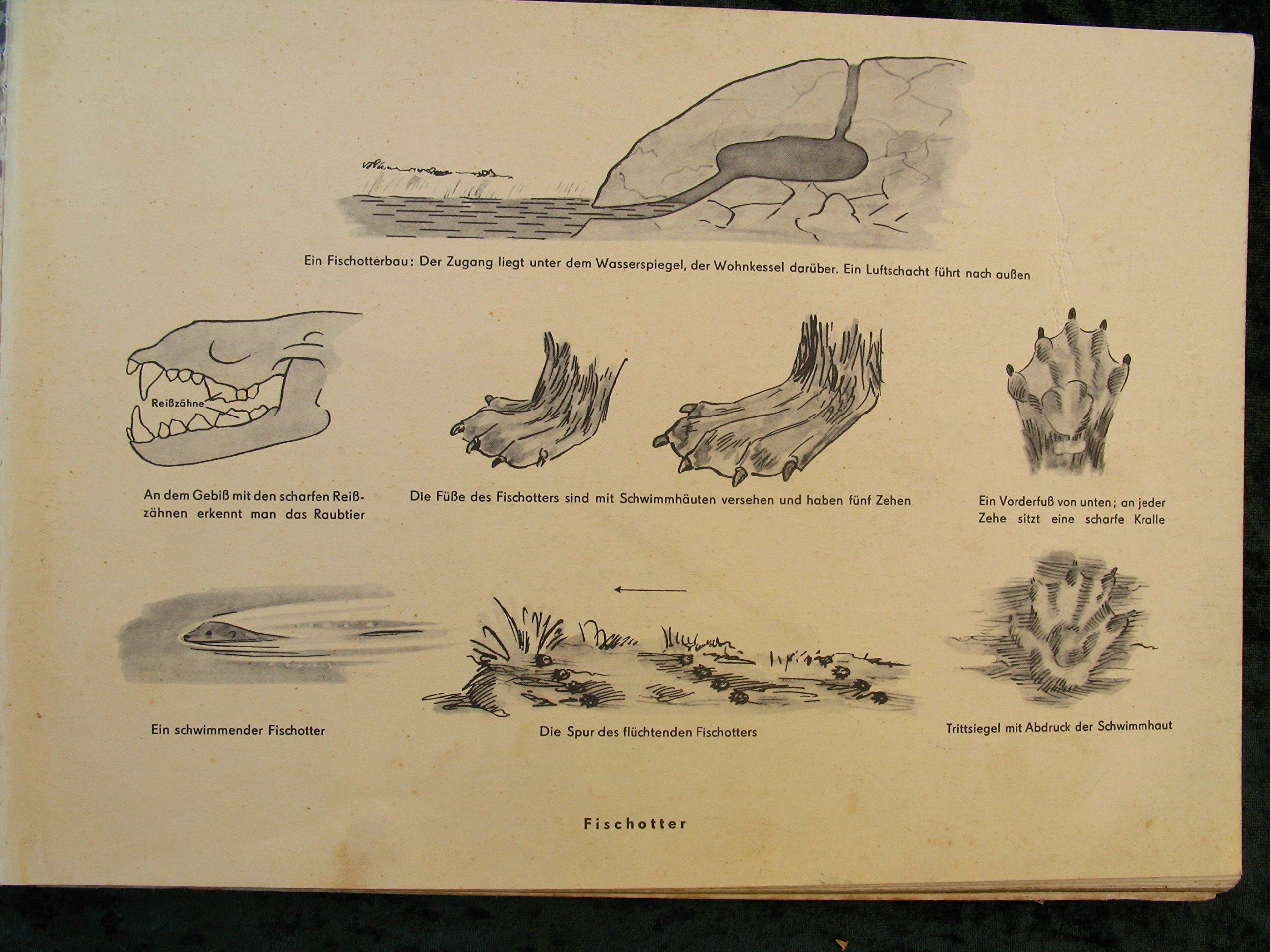 Ich weiß etwas – Tierbeobachtungen am Wasser: Amazon.de: Schulz ...