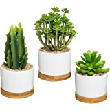 Vibrant Artificial Succulent Potted Plants in Round White Ceramic Pot with Bamboo Saucer, Set of 3