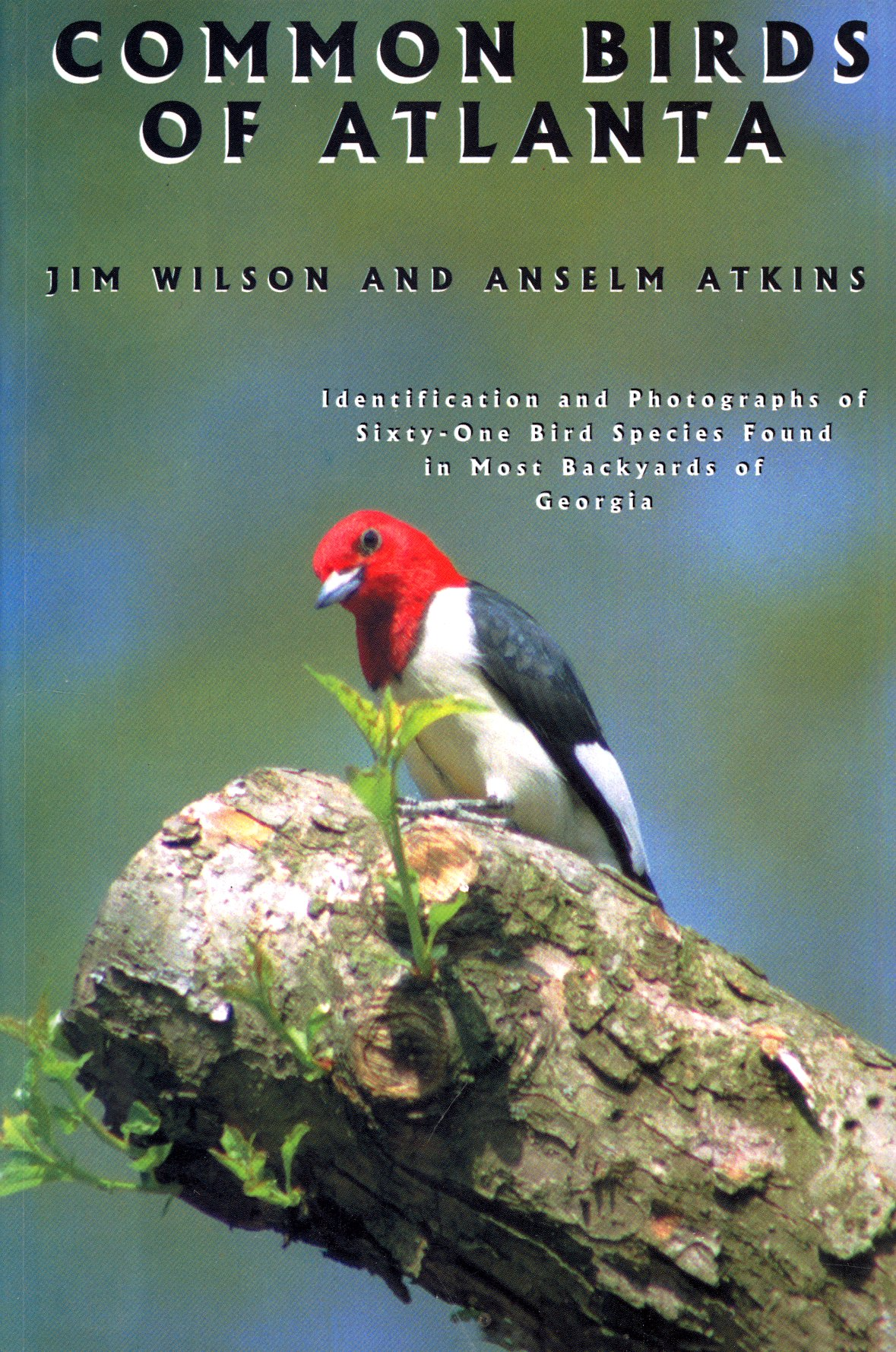 common birds of atlanta jim wilson 9780966724011 amazon com books