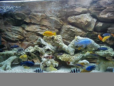 Aqua Maniac - Fondo 3D para acuario en dos secciones, color beige, polirresina (no espuma), 4-6 cm de grosor, decoración acuática única: Amazon.es: ...