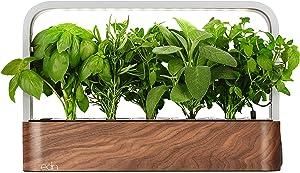 edn SmallGarden with Basil SeedPods, Indoor Grow Smart Garden Starter Kit for Fresh Home Grown Herbs, Plants and Flowers