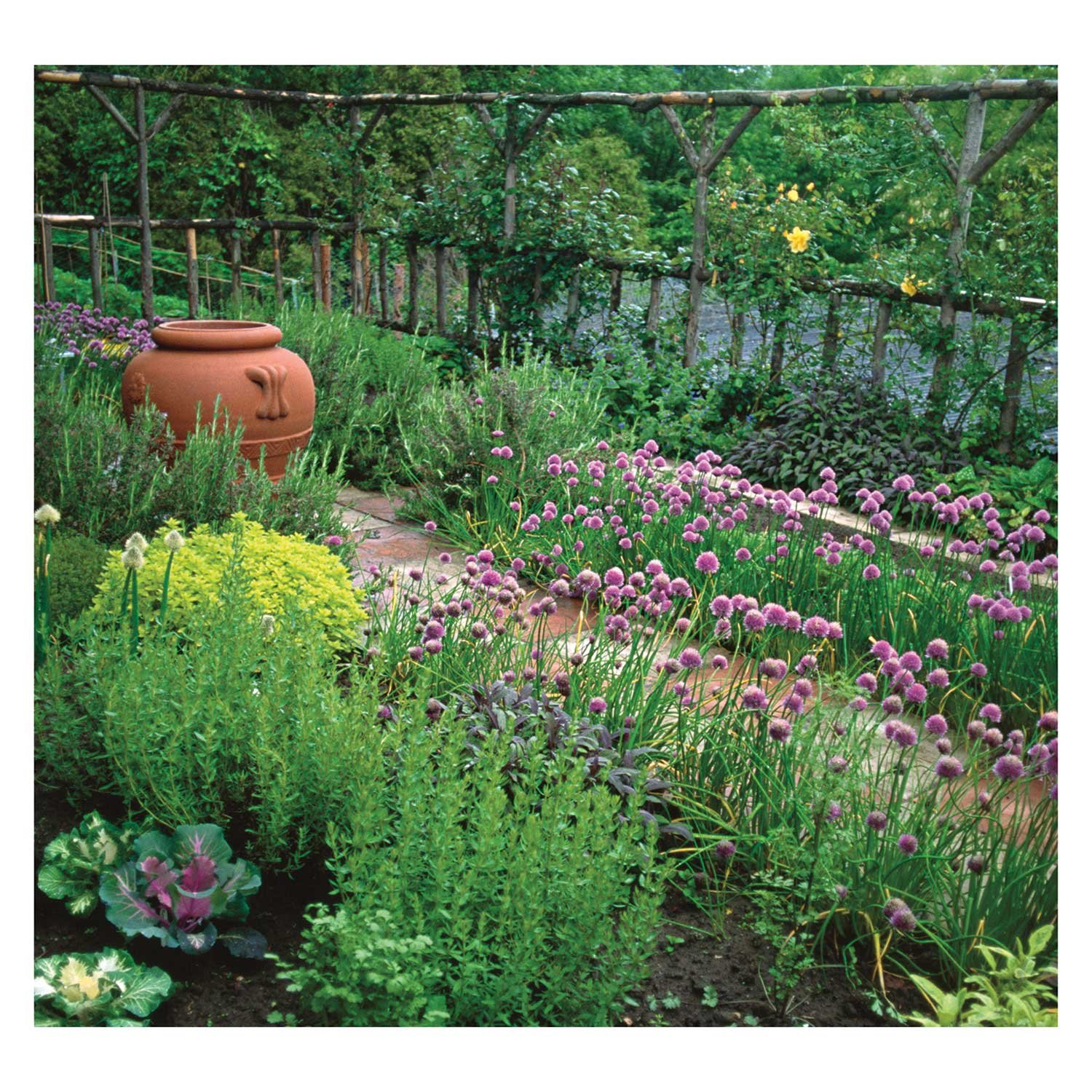 Herb Gardens 2018 Wall Calendar: Recipes & Herbal Folklore: Maggie Oster,  Amber Lotus Publishing: 9781631362767: Amazon.com: Books