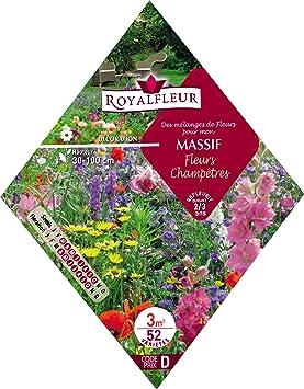 Royalfleur PFRK08357 Graines de Mélange de Fleurs mon Massif Fleurs ...