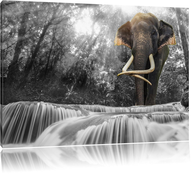 lphant gant au flux noir blanc taille 100x70 sur toile norme xxl photos compltement encadre avec civire art impression sur murale avec cadre - Cadre Elephant