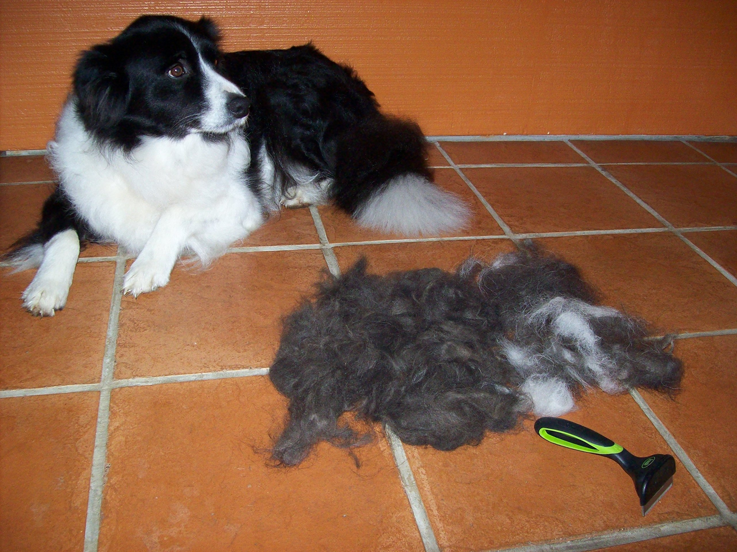 TOP QUALITY de Shedding Tool for Dog + Cat Grooming The Secret to Reducing Pet Shedding Quickly Up To 90% deshedder Tools for Dogs & Cats - Veterinary + Groomer approved for All Pets by GroomMe (Image #5)