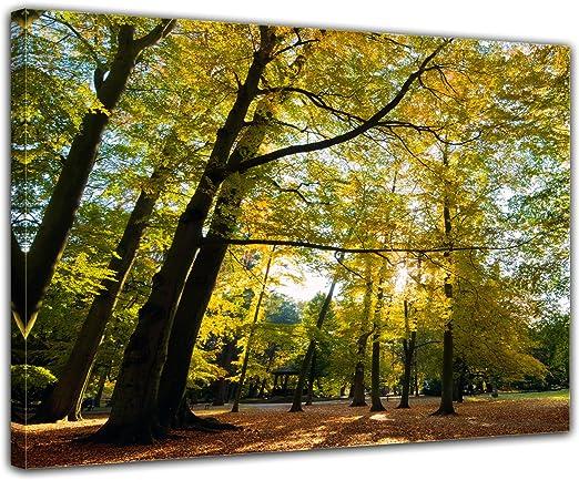 Bilderdepot24 Cuadros en Lienzo Las Hojas Que Caen en otoño 120x90 ...