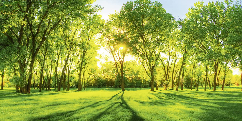 Artland Qualitätsbilder I Glasbilder Deko Glas Bilder 100 x 50 cm Landschaften Wiesen Bäume Foto Grün D8RW Frühlingswärme II