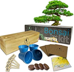 Bonsai Starter Kit - Complete Growing Kit to Grow 4 Bonsai Trees from Seed - Comprehensive Guide - Bonsai Tree Kit - Indoor Growing Plant - Gardening Gift Idea for Women - Great DIY Adult Craft Idea