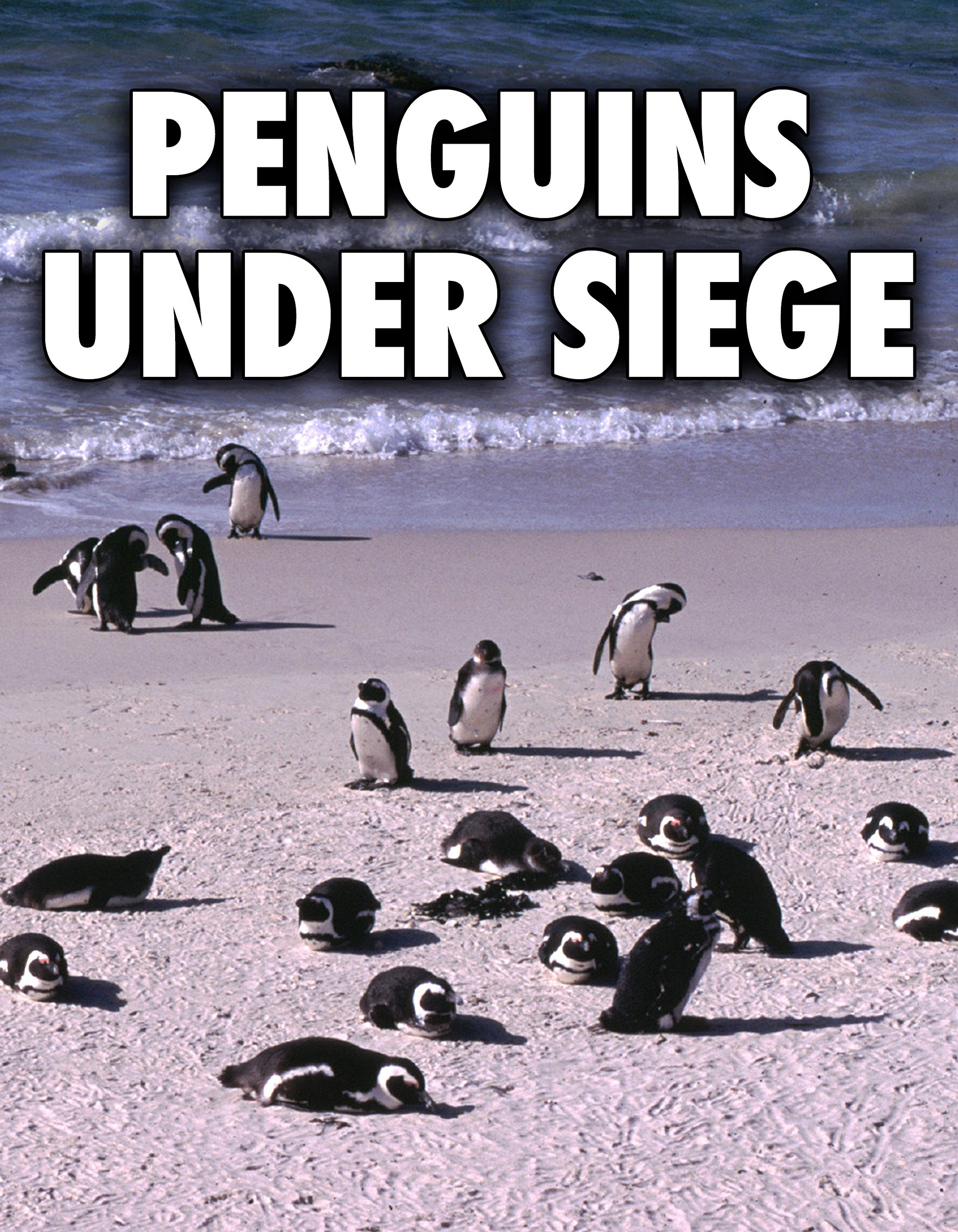 Penguins Under Siege on Amazon Prime Video UK