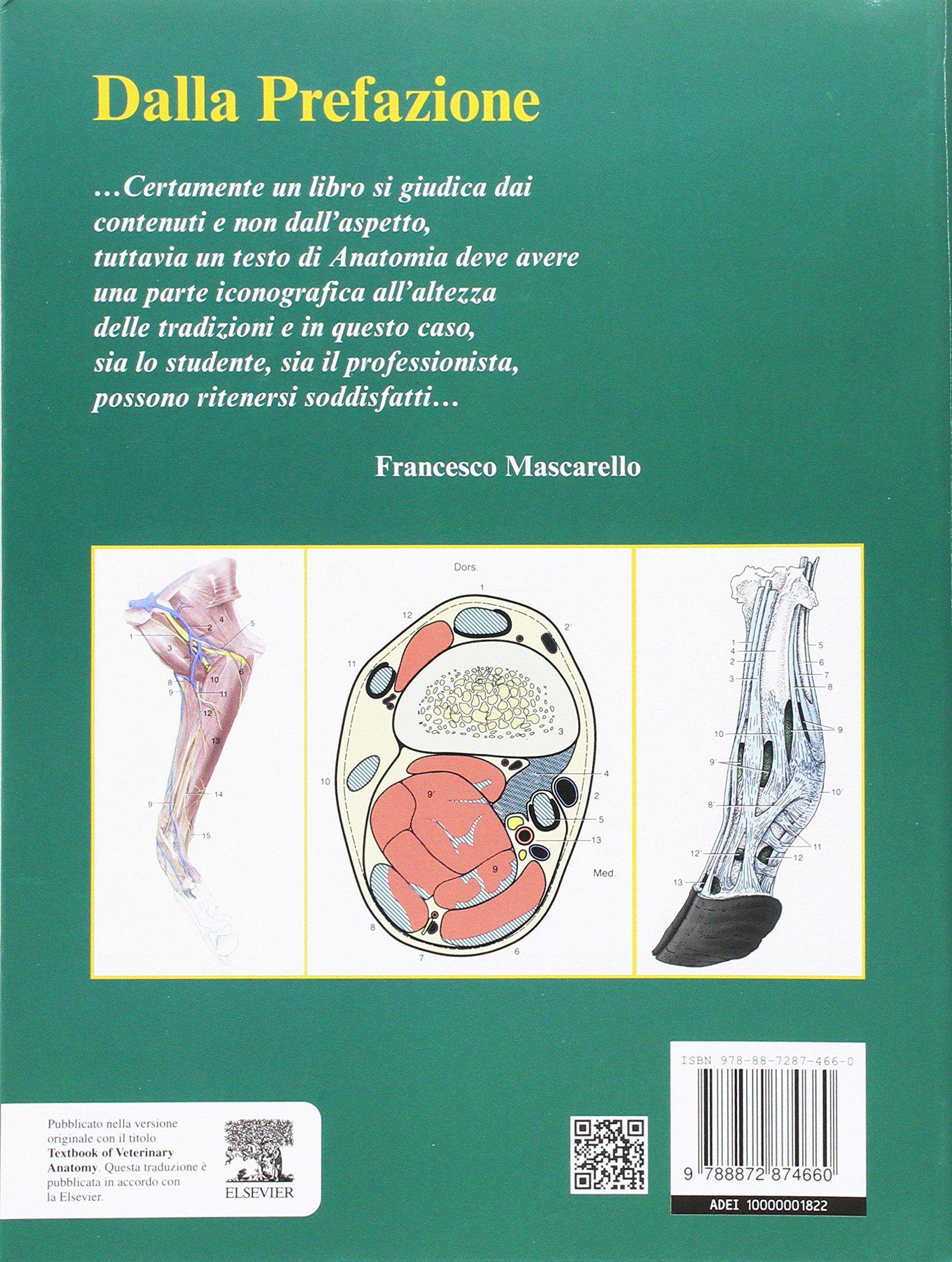 Bonito Anatomía Veterinaria Dyce Ornamento - Anatomía de Las ...
