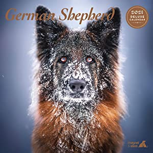 German Shepherd 2021 Calendar: Deluxe Dog Calendar - Wire Bound Wall Calendar 2021-2022, (12″ x 12″) 12 Months - Dog Owner Gift - Dog Lover Gift