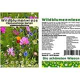 Seedeo Duftblumenwiese