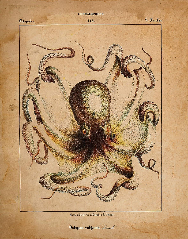 Octopus Art Set of 6 unframed prints Nautical Decor Octopus Wall Art Octopus Prints Nautical Wall Art