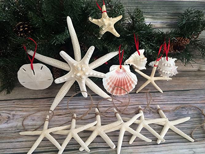 tropical starfish and seashell christmas package