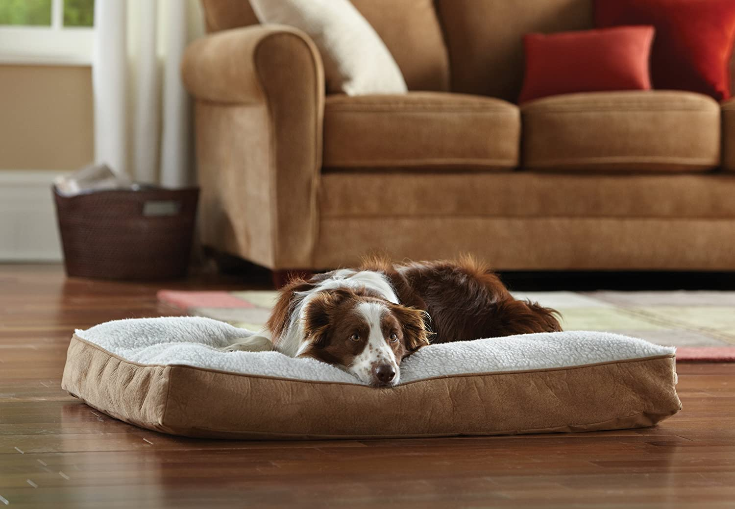 b bowls zoom beds big dog in orthopedic bed schneider at bolstered large product