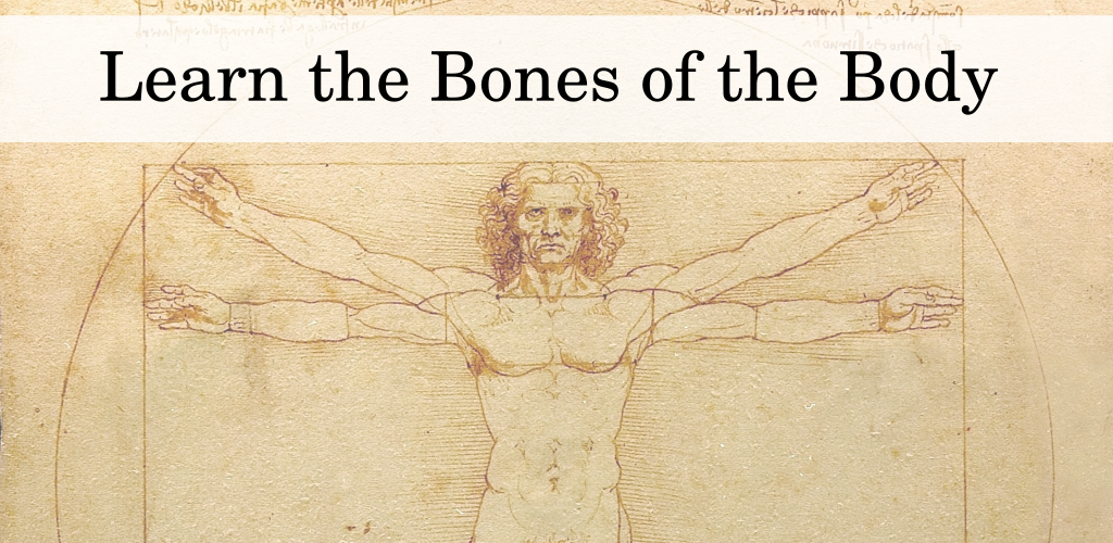 Amazon Learn The Bones Of The Body Appstore For Android