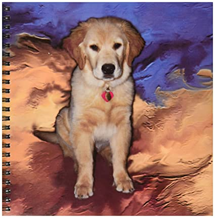 amazon com 3drose db 3969 1 golden retriever puppy drawing book 8