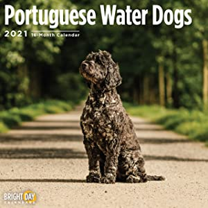 2021 Portuguese Water Dogs Wall Calendar by Bright Day, 12 x 12 Inch, Cute Dog Puppy