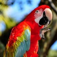 parrot talking