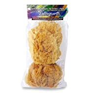 """Natural Sea Sponges for Artists - Unbleached 5""""-5.5"""" 2pc Value Pack: Great for Painting, Decorating, Texturing, Sponging, Marbling Effects, Faux Finishes, Crafts, More"""
