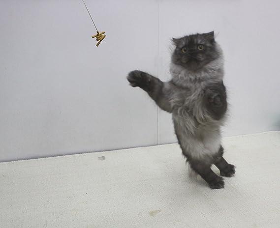 Cat Dancer Products CATD0101D Katzenspielzeug: Amazon.de: Haustier