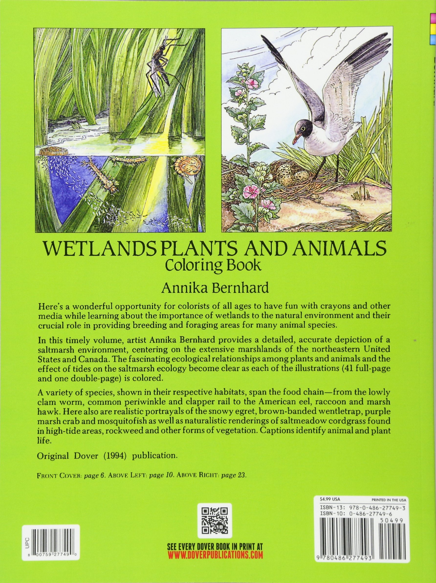 wetlands plants and animals coloring book annika bernhard