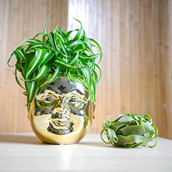 Concretelab Gold Buddha Kopf Keramik Blumentopf Garten