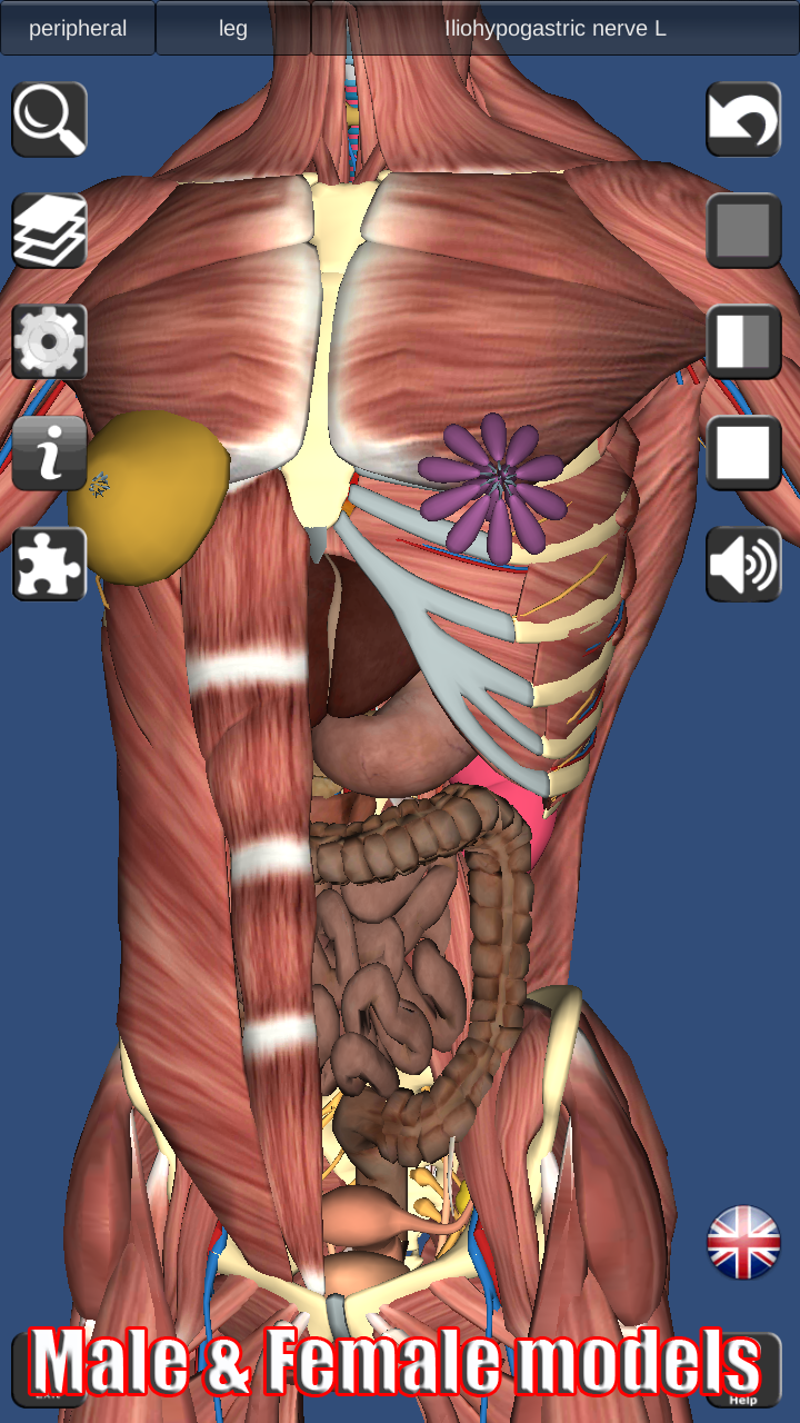 Amazon.com: 3D Anatomy: Appstore for Android