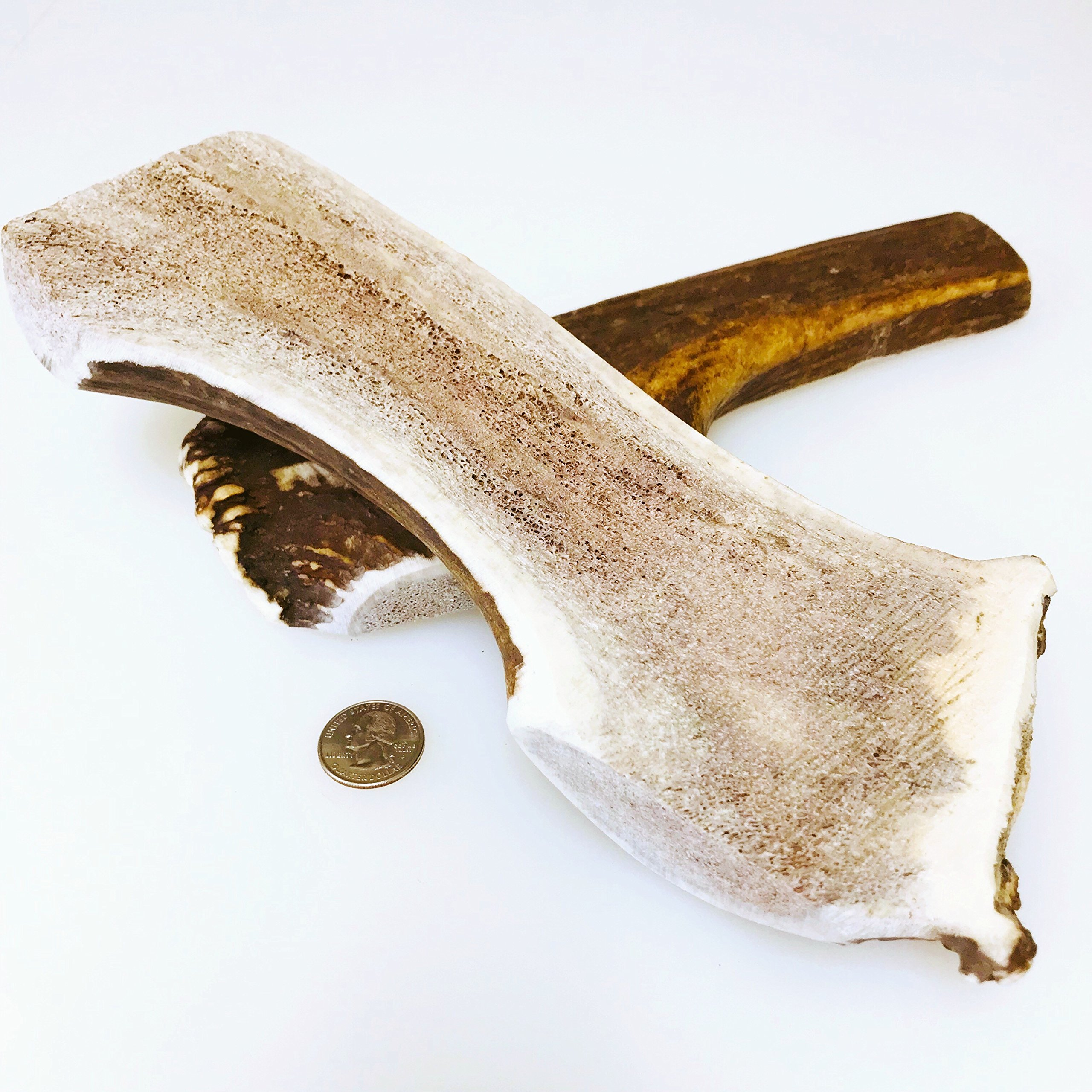 Mountain Dog Chews Mammoth Split Elk Antler Dog Chew 10-12 long & typically 14-16 ounces! Freshest and Largest Antlers At The lowest Price!!