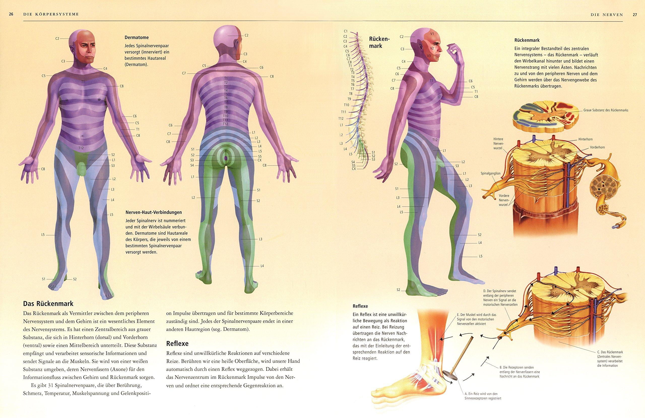 Ungewöhnlich Die Körpersysteme Ideen - Menschliche Anatomie Bilder ...