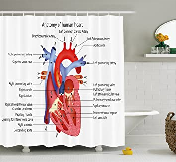 Educational Shower Curtain By Ambesonne Medical Structure Of The Hearts Human Body Anatomy Organ Veins