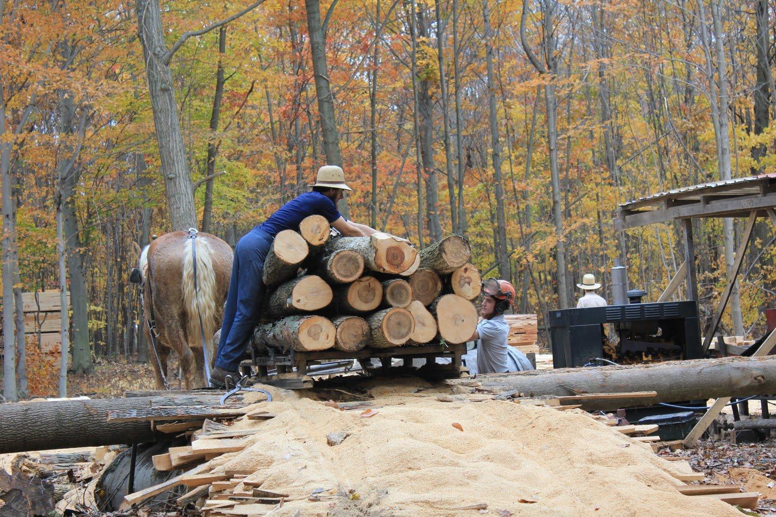 2 Thin Butternut Wood Boards @ 1/4 x 3 x 48 Inches. Kiln Dry Lumber
