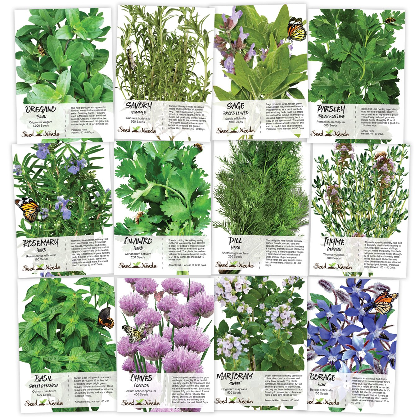 Non-GMO Culinary Herb Seed Collection, 12 Individual Seed Packets Incl. 4,000+ Seeds Collectively (Sage, Basil, Chives, Cilantro, Rosemary, Dill, Marjoram, Oregano & More!) Seeds by Seed Needs by Seed Needs
