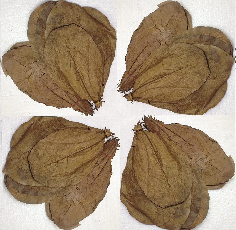 SunGrow 100 Pcs. Catappa Ketapang Indian Almond Leaf for Fish Tank MARIMO PET STORE